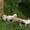 пушистые котята #1563181